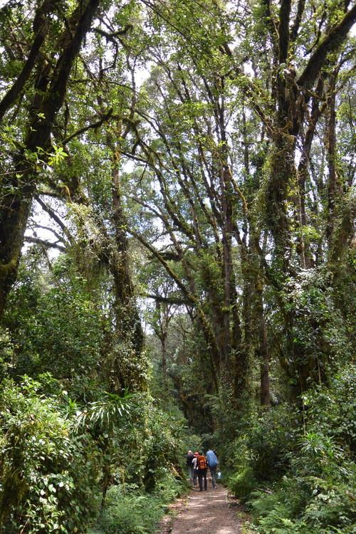 """2015年2月「アフリカの大地に聳える白き峰、キリマンジャロ」 February 2015 \""""Kilimanjaro, Africa\""""_c0219616_1535476.jpg"""
