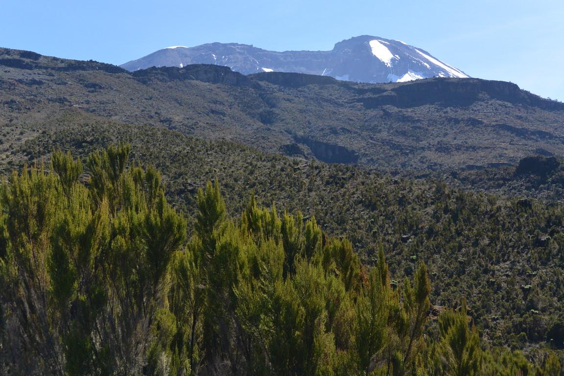 """2015年2月「アフリカの大地に聳える白き峰、キリマンジャロ」 February 2015 \""""Kilimanjaro, Africa\""""_c0219616_1555168.jpg"""
