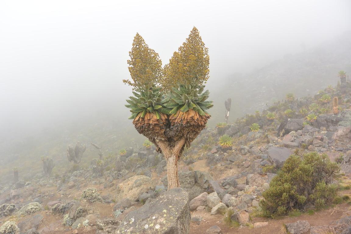 """2015年2月「アフリカの大地に聳える白き峰、キリマンジャロ」 February 2015 \""""Kilimanjaro, Africa\""""_c0219616_21455189.jpg"""