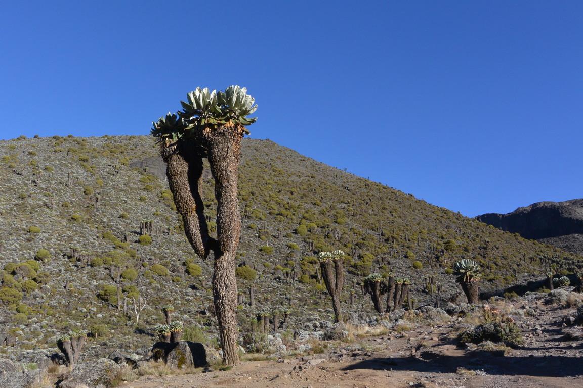 """2015年2月「アフリカの大地に聳える白き峰、キリマンジャロ」 February 2015 \""""Kilimanjaro, Africa\""""_c0219616_21564586.jpg"""