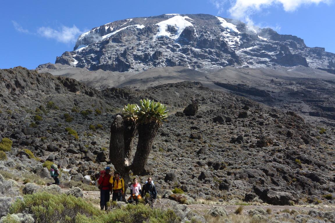 """2015年2月「アフリカの大地に聳える白き峰、キリマンジャロ」 February 2015 \""""Kilimanjaro, Africa\""""_c0219616_222838100.jpg"""