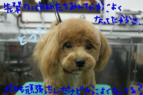 b0130018_20115552.jpg