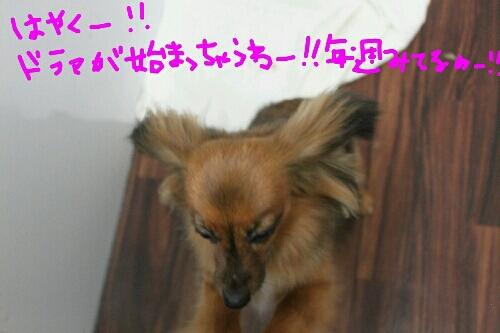 b0130018_23413064.jpg