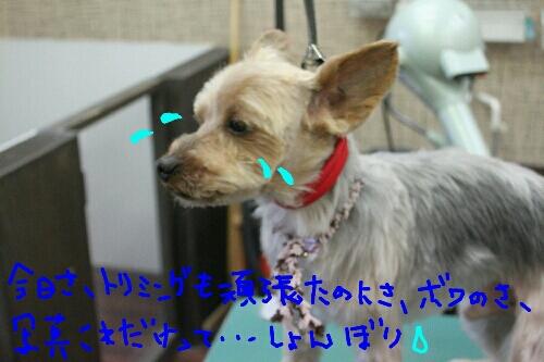 b0130018_23415328.jpg