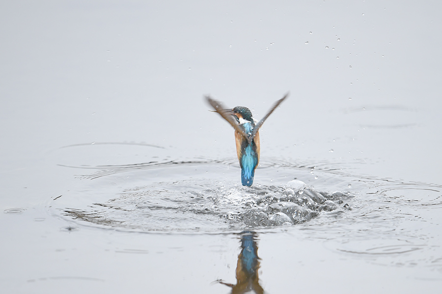 150226 曇天雌の水物など_c0278820_17253959.jpg