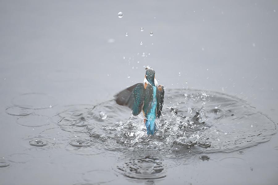 150226 曇天雌の水物など_c0278820_1792676.jpg