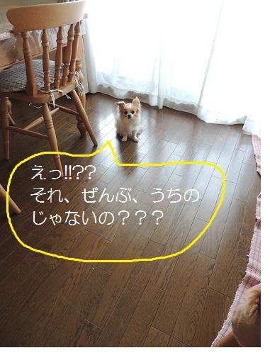 f0049124_825341.jpg