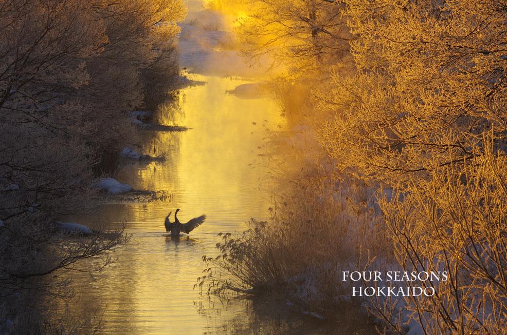1月に見た金色の朝_f0152939_55256.jpg