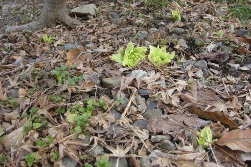 春の兆し_e0226943_23465970.jpg