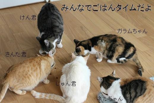 今日の保護猫さんたち_e0151545_21090238.jpg