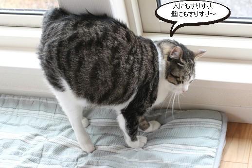 今日の保護猫さんたち_e0151545_21092773.jpg