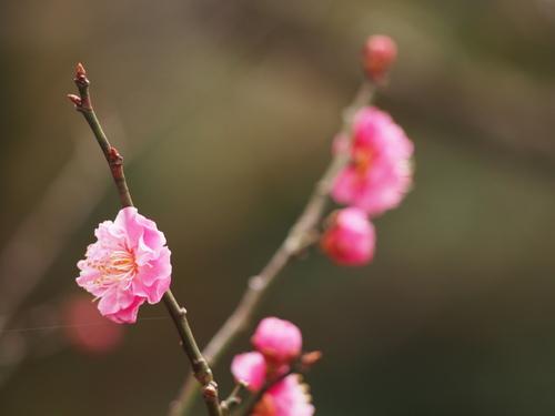 f0357183_1995983.jpg