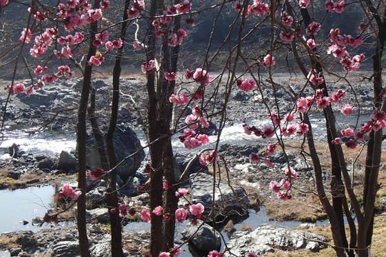 春も近いですよ_b0225495_0352852.jpg