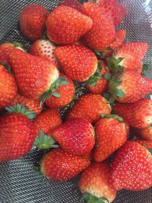 旬のイチゴを使ったお菓子作り教室_a0126418_1144171.jpg