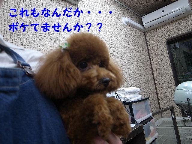 b0130018_22142732.jpg