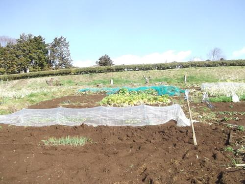 ジャガイモの植え付け準備完了!_b0137932_14243965.jpg