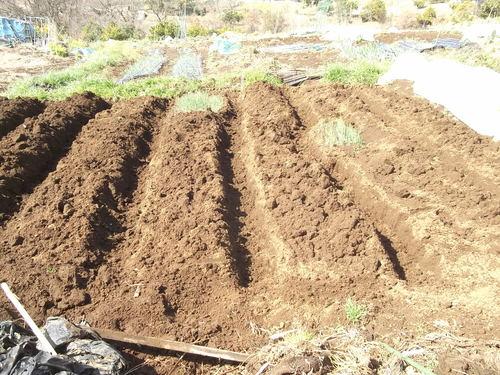 ジャガイモの植え付け準備完了!_b0137932_14253187.jpg