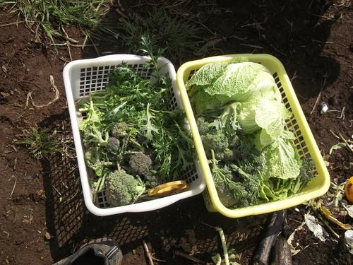 ジャガイモの植え付け準備完了!_b0137932_14271768.jpg