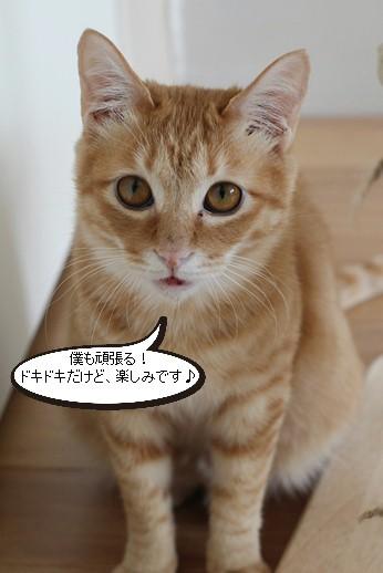 保護猫さん、明日、卒業です_e0151545_22451314.jpg