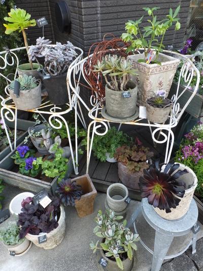 オークリーフ(繊細な春の花と多肉系)_f0049672_18193220.jpg