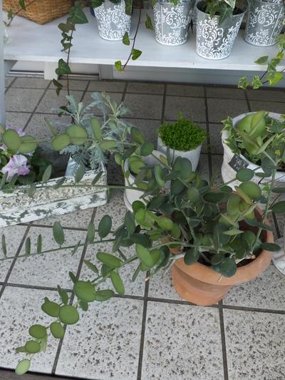 オークリーフ(繊細な春の花と多肉系)_f0049672_18194699.jpg