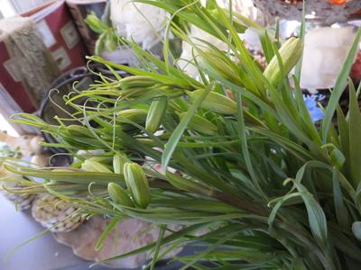オークリーフ(繊細な春の花と多肉系)_f0049672_18325619.jpg