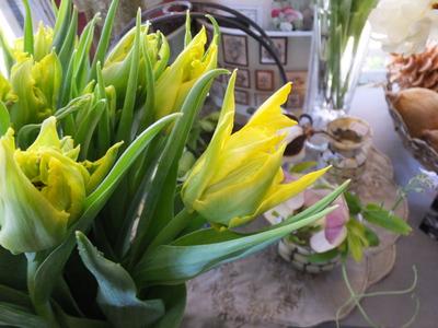 オークリーフ(繊細な春の花と多肉系)_f0049672_1835093.jpg