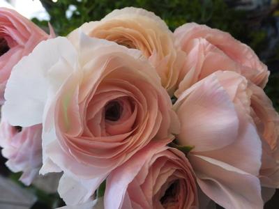 オークリーフ(繊細な春の花と多肉系)_f0049672_18351461.jpg