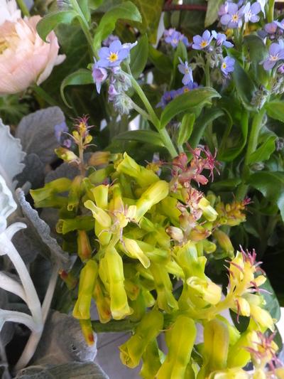 オークリーフ(繊細な春の花と多肉系)_f0049672_18353030.jpg