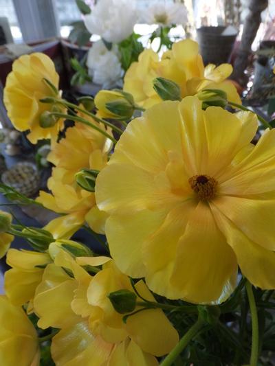 オークリーフ(繊細な春の花と多肉系)_f0049672_18353954.jpg