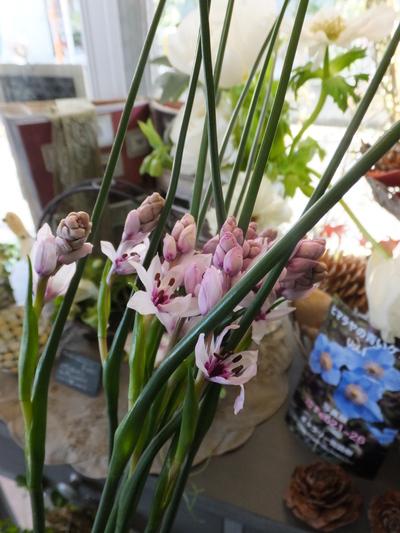 オークリーフ(繊細な春の花と多肉系)_f0049672_18355794.jpg