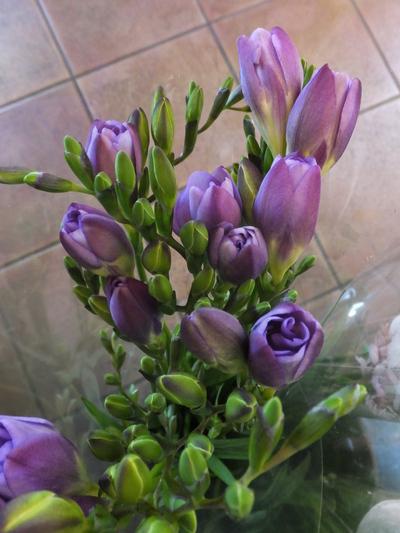 オークリーフ(繊細な春の花と多肉系)_f0049672_18362856.jpg