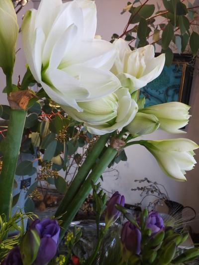 オークリーフ(繊細な春の花と多肉系)_f0049672_1838723.jpg