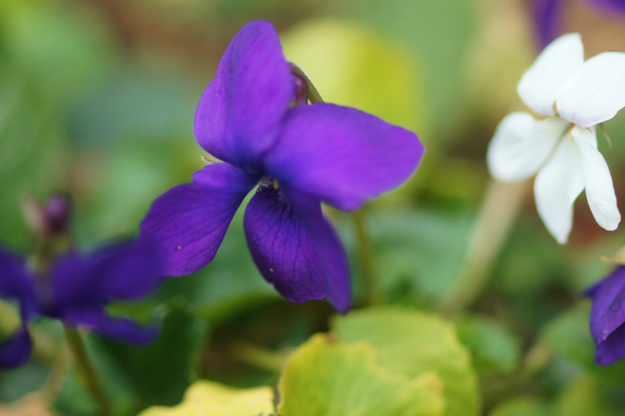 シクラメン・コウムの花!_e0181373_20261787.jpg
