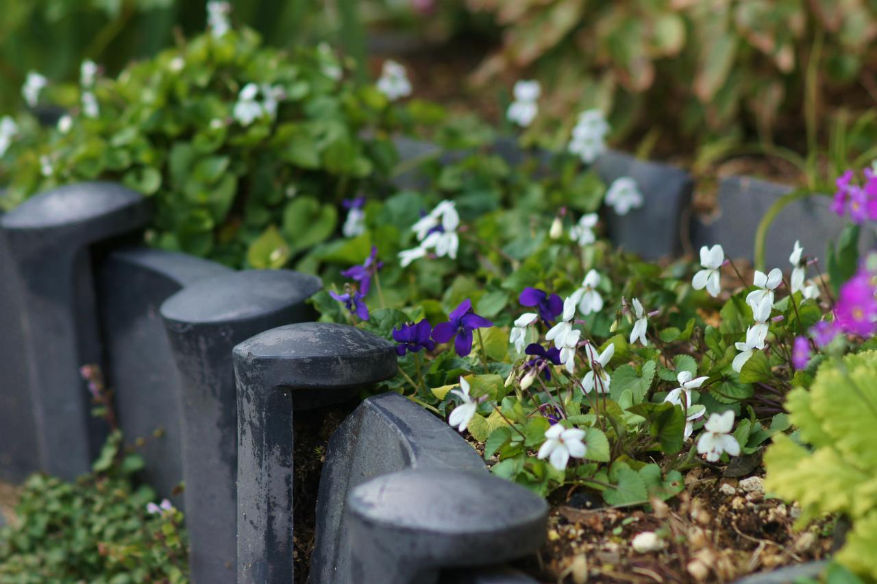 シクラメン・コウムの花!_e0181373_20263556.jpg