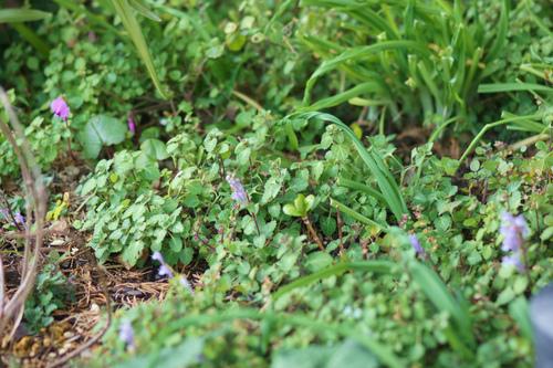 シクラメン・コウムの花!_e0181373_207376.jpg