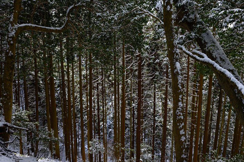 2015京の雪景色@鞍馬 其の二_f0032011_18233669.jpg