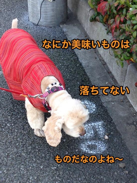 b0067012_1575894.jpg