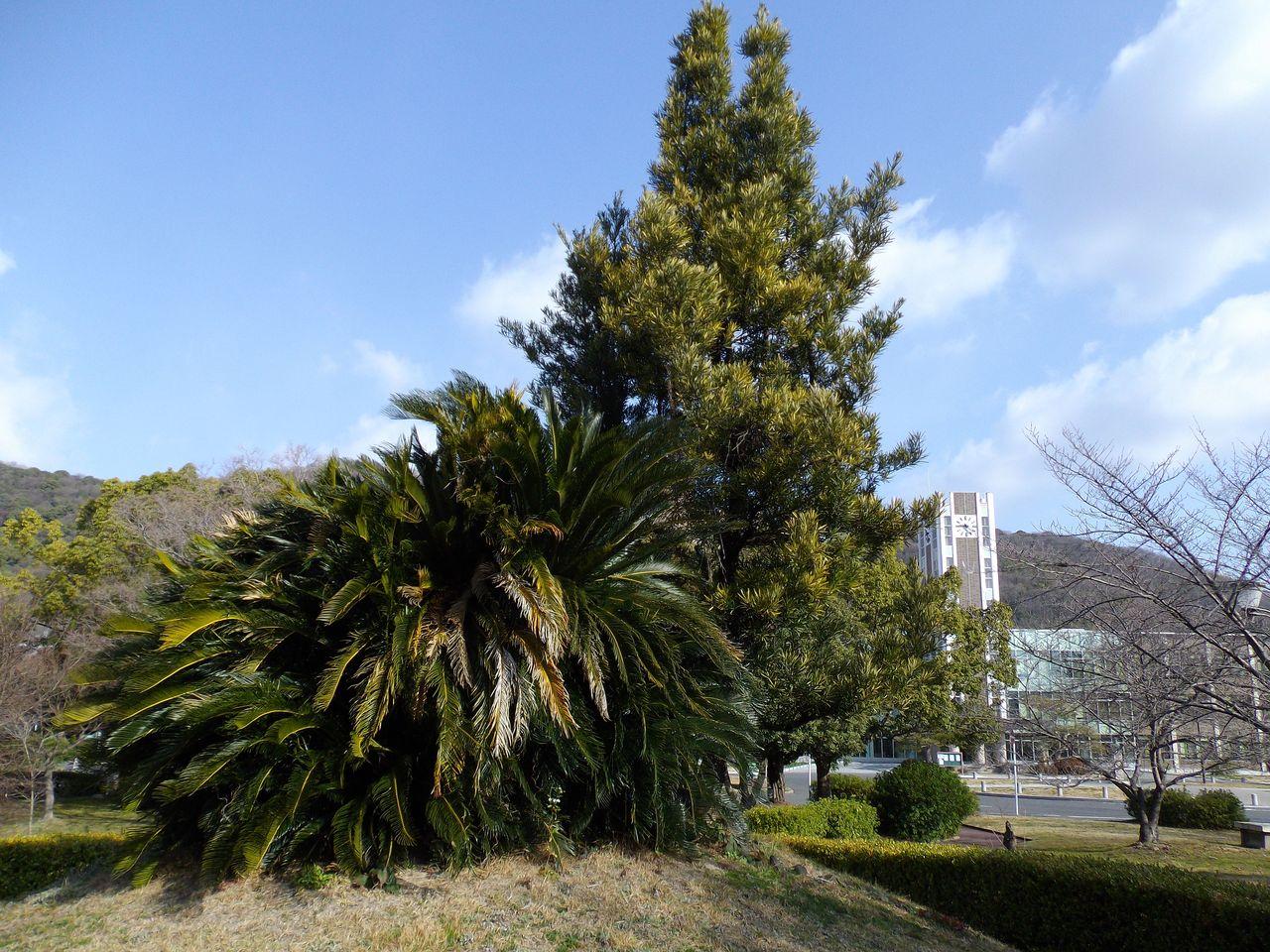 岡山大学で研修会 _c0025115_52054.jpg