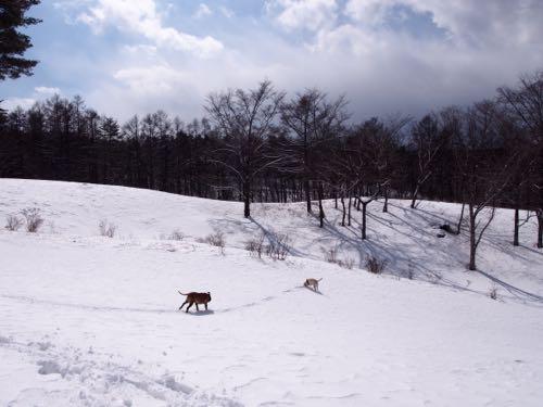 お山の向こう側へ_e0192217_871676.jpg
