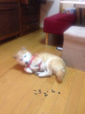 キラキラ☆_c0071924_23029100.jpg