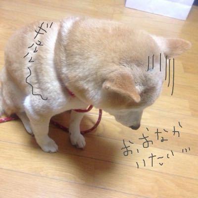 キラキラ☆_c0071924_2303174.jpg