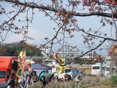 梅と桜..小出川を散歩!_b0137932_13411724.jpg