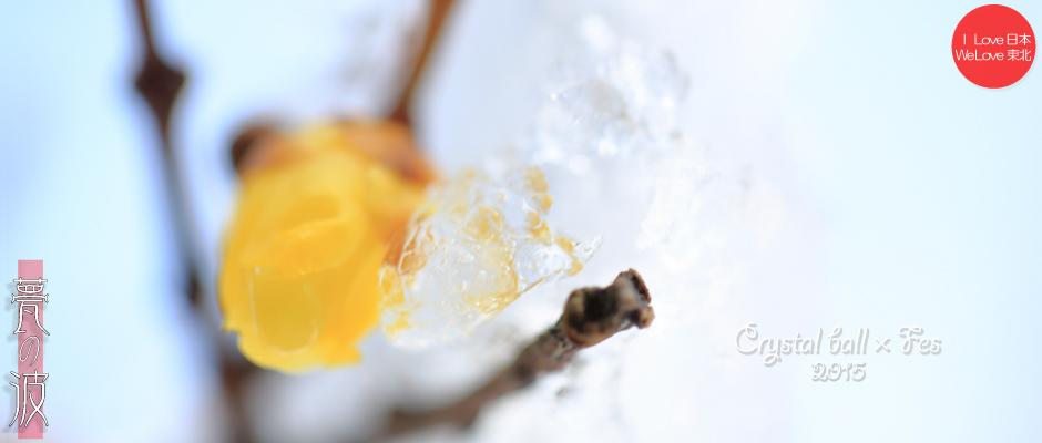 2015 Crystal ball × Fes『春色』(蝋梅&椿)_b0157849_19140959.jpg