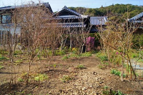ブルーベリー畑の手入れ_e0181373_2145524.jpg