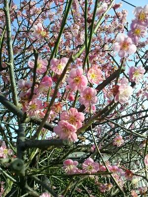 春ですよ☆_d0062076_23153641.jpg