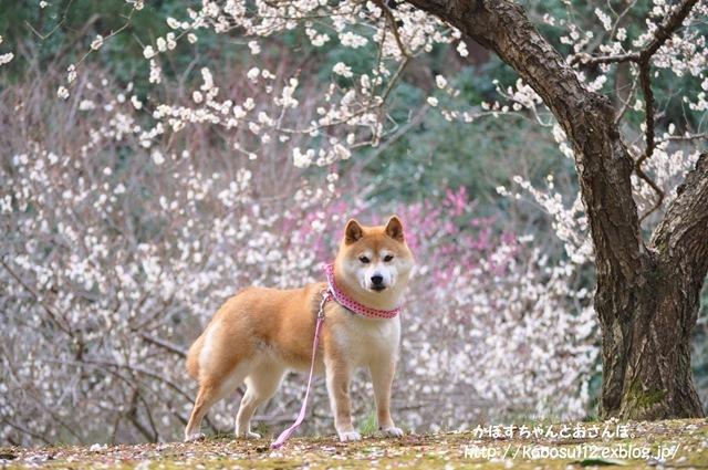 春がきた_a0126590_08200701.jpg