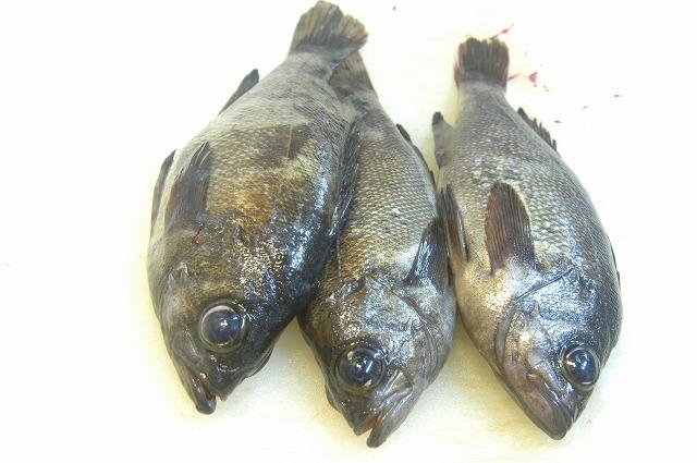 明石の魚 もちろん元気です!_d0268290_13595160.jpg