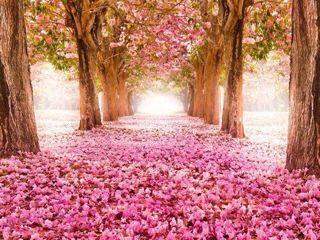 春がそこまで_c0330308_231521.jpg