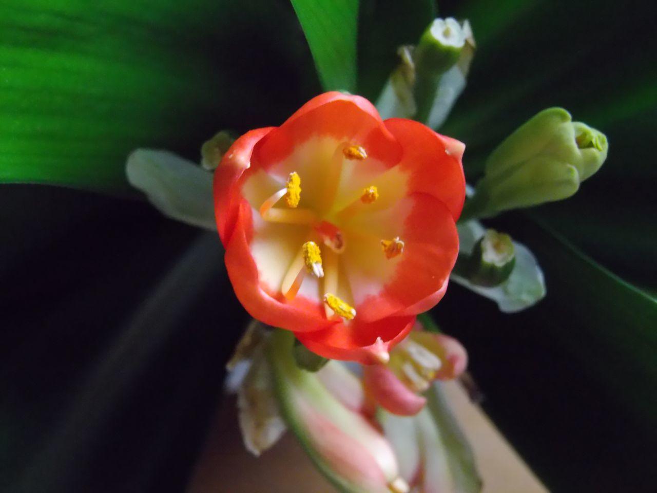 春近し_c0025115_21214115.jpg